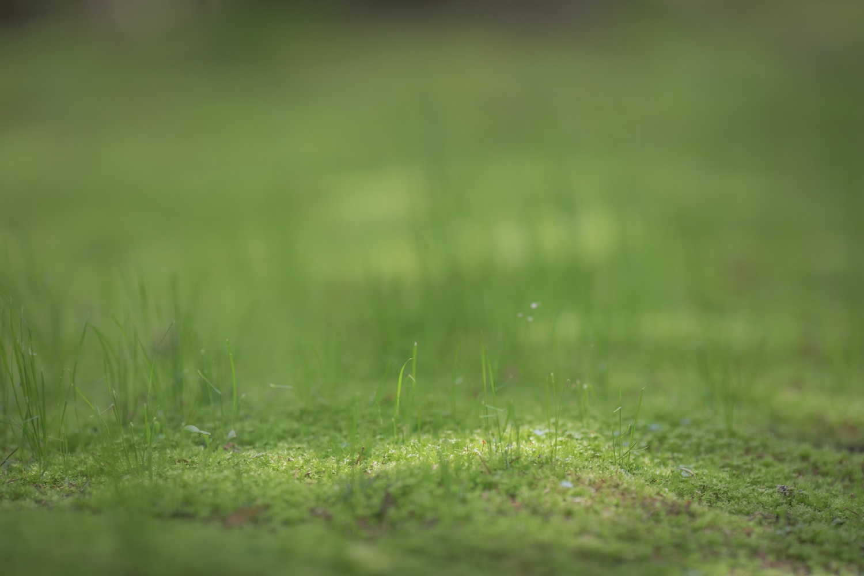 芽吹いてきた草花の画像です