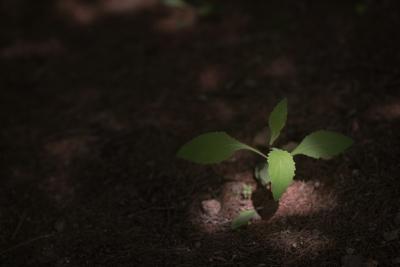 新芽の画像です