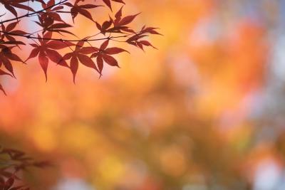 秋の軽井沢の写真です