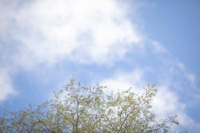 結婚式の日の晴天の青空と新緑の木