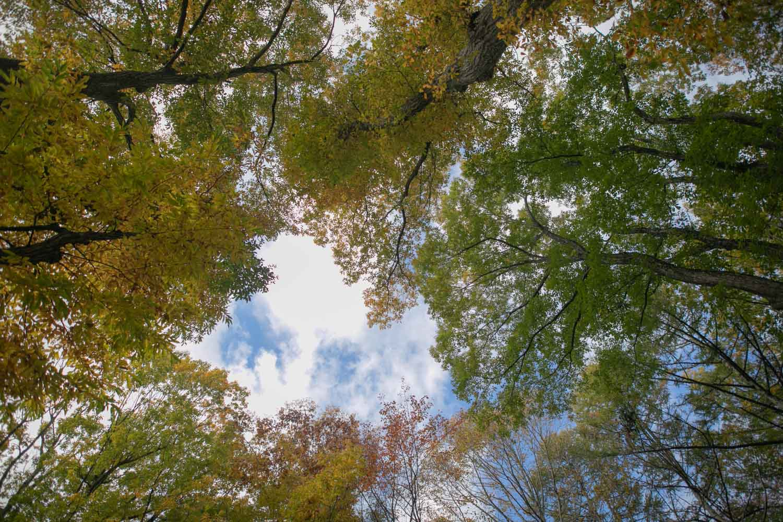 青空と紅葉と緑の軽井沢の空