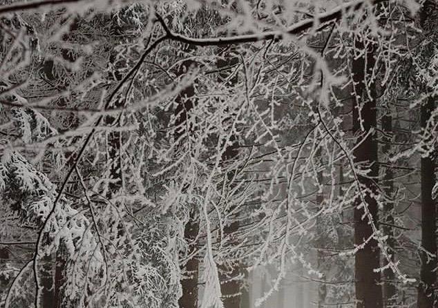 雪が降った日の木々の様子です